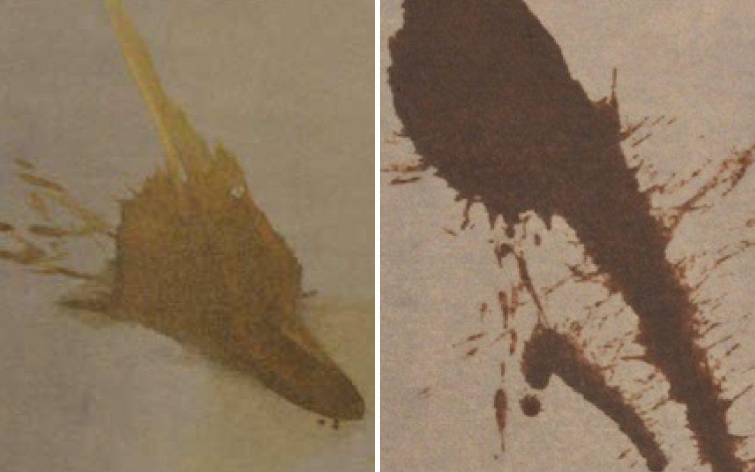 Fleckentfernung bei Teppichen und Polstermöbeln